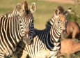 Game viewing at Addo Elephant Park